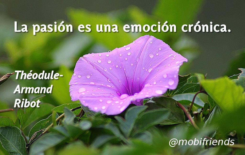 Frases amor cortas pasion emocion