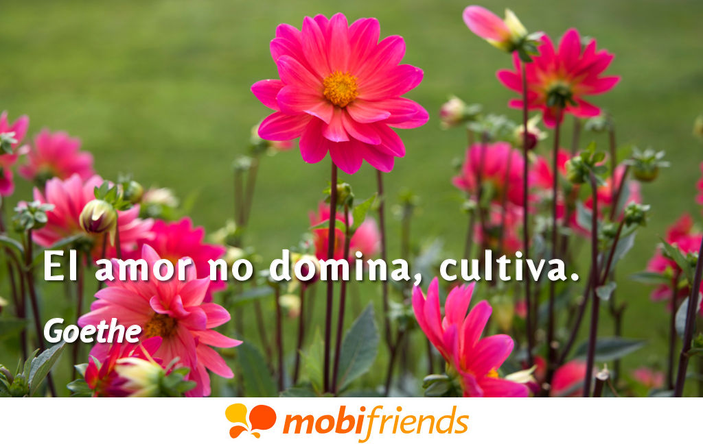 Frases reflexion amor cultiva